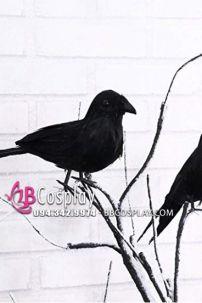 Chim Giả - Chim Quạ Đen Bằng Lông Thật